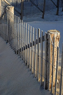 A sand fence illuminated by warm morning light, near Provincetown at the top of Cape Cod Bay, Massachusetts, USA