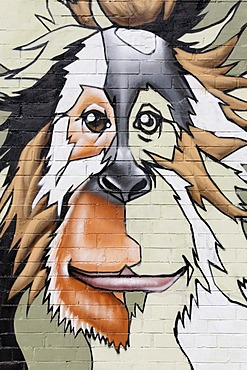 Head of an orang-utan, graffiti on the wall of the Cologne Zoo, Cologne, North Rhine-Westphalia, Germany, Europe
