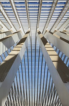 Detailed view of the roof of the station concourse, Gare de Liege-Guillemins railway station, architect Santiago Calatrava, Liege, Luik, Wallonia, Belgium, Europe