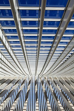 Roof detail of the concourse, Gare de Liege-Guillemin station by architect Santiago Calatrava, Liege, Wallonia or Walloon Region, Belgium, Europe
