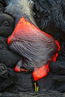 Viscous P&hoehoe lava flowing from rifts in the East Rift Zone towards the sea, lava field at the Kilauea shield volcano, Volcanoes National Park, Kalapana, Hawaii, USA