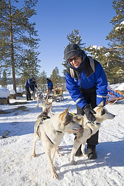Woman patting a Husky on a sled dog tour with Siberian Huskies in Kiruna, Lappland, North Sweden, Sweden