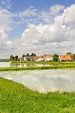 Aischgrund carp ponds at Gottesgab near Uehlfeld, Middle Franconia, Bavaria, Germany, Europe