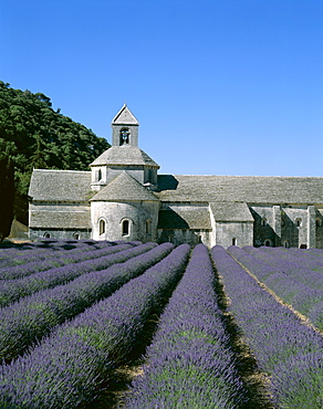 Senanque Abbey (Abbaye de Senanque) and lavender fields, Gordes, Provence, France, Europe