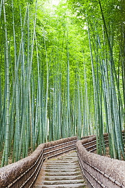 Bamboo forest, Adashino Nembutsu-ji Temple, Arashiyama, Kyoto, Japan, Asia
