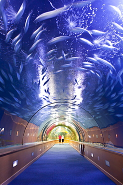 Inside a fish tank at L'Oceanographic, a marine aquarium in the City of Arts and Sciences, Valencia, Spain, Europe