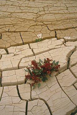 cracked earth in Ein Akev in the Negev desert, Israel