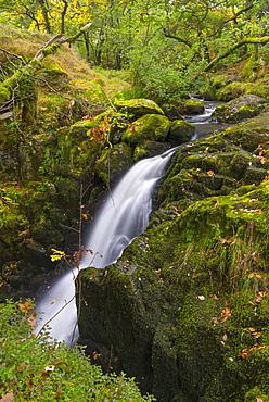 Autumnal colours at Aira Beck, Lake District, Cumbria, England, United Kingdom, Europe