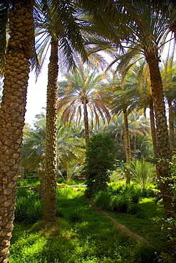 Oasis, Al Ain, Abu Dhabi, United Arab Emirates, Middle East