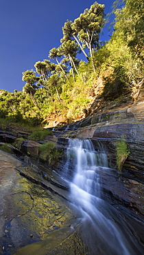 Water flows down the forested slopes of Mount Nyiru, Northern Frontier, Kenya, East Africa, Africa