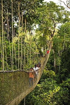 People on Canopy Walkway through tropical rainforest in Kakum National Park, Ghana, Africa