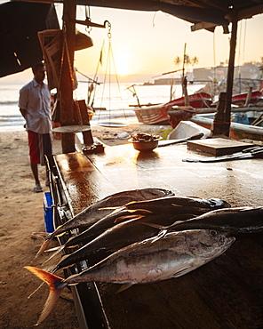 Fish market at dawn, Galle, South Coast, Sri Lanka, Asia