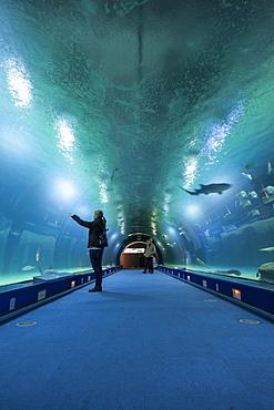 The aquarium in the City of Arts and Sciences (Ciudad de las Artes y las Ciencias) in Valencia, Spain, Europe