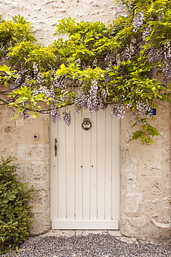 Wisteria in full bloom surrounds a door in Saint-Dye-sur-Loire, Loir-et-Cher, France, Europe