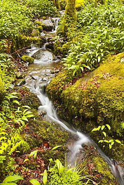 Part of Stock Ghyll Force waterfall near Ambleside, Lake District National Park, Cumbria, England, United Kingdom, Europe
