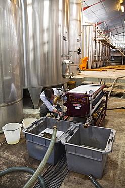 An employee at Gitton Pere et Fils filters wine, Sancerre, Cher, Centre, France, Europe