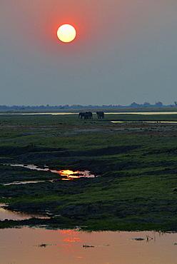 Elephants on the riverbank at dusk, Chobe Botswana