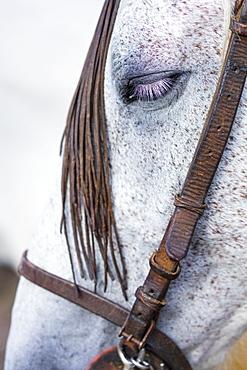 Horse, Horse riding, Sierra de Gredos, Avila, Castilla y Le?n, Spain, Europe
