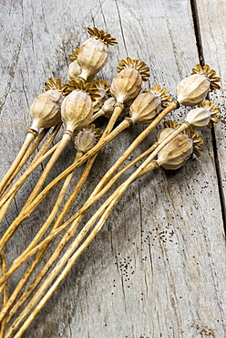 Dried fruits of poppy flowers
