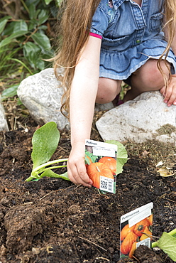 Plantation step by step of squashes by little girls