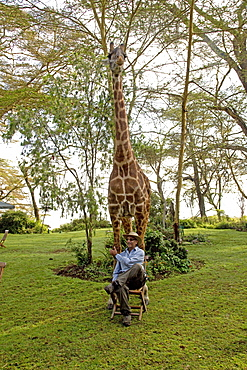 Tourist wearing hat poses sitting on chair in front of Eric a person-friendly giraffe at Elsamere Naivasha Kenya