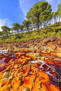 """R?o Tinto, Andalucia, Spain *** Local Caption *** R?o Tinto (""""Red River"""") is very acidic (Ph 2) and has a deep reddish hue due to iron dissolved in water. The acidity of the watercourse is linked to the drainage of pyrite, which is very present in the subsoil. Extremophilic and endemic bacteria and algae colonize the river bed, forming a fragile biofilm that evokes the hot springs of Yellowstone Park in the USA."""