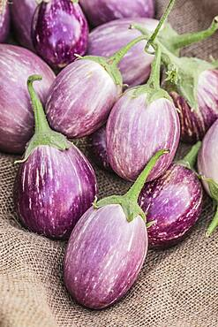 Eggplant 'Angela' harvested and left to dry. The fruits should not lose too much water but it is possible to dry the eggplant, cut into slices.