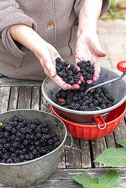 Making an old-fashioned blackberry jam in summer