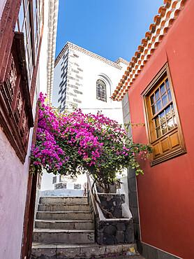 Bougainvillea, Garachico, Tenerife, Islas Canarias, Espagne