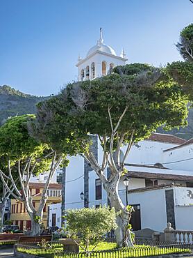 Eucalyptus, Plaza de La Libertad, Iglesia de Santa Ana, Garachico, Tenerife, Islas Canarias, Espagna