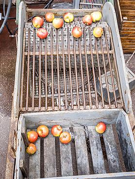 Calibreuse ancienne de pommes