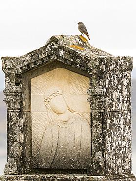 Black Redstart (Phoenicurus ochruros) female posed on a sculpture of the citadel of Forcalquier, Alpes-de-Haute-Provence, France