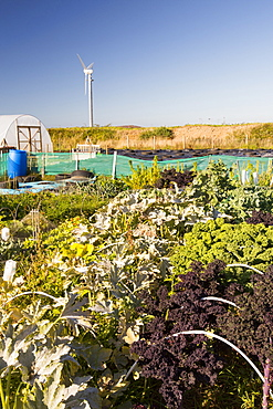 The organic community garden at Mount Pleasant Ecological Park, Porthtowan, Cornwall, UK.