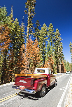 Wildfire damage in Yosemite National Park, California, USA. Most of California is in exceptional drought, the highest classification of drought, which has lead to an increasing number of wild fires.