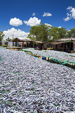 Fish caught in Lake Malawi, on drying racks at Cape Maclear, Malawi, Africa.