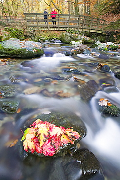 Fallen leaves in Stock Ghyll near Ambleside, Lake District, Cumbria, England, United Kingdom, Europe