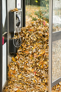 A telephone box near Loughborough full of autumn leaves, Leicesetershire, England, United Kingdom, Europe