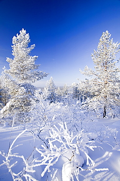 Woodland in the Urho Kehkkosen National Park near Saariselka, Northern Finland, Finland, Scandinavia, Europe