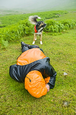 A search dog locates a walker collapsed with hypothermia in the Lake District, Cumbria, England, United Kingdom, Europe