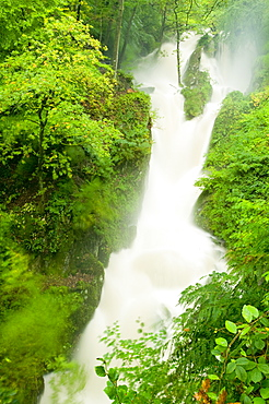 Stockghyll Force in full flood in summer Ambleside, Lake District, Cumbria, England, United Kingdom, Europe