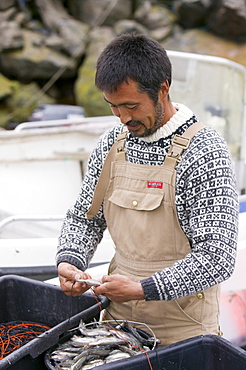 An Inuit man baiting lines for catching Greenland halibut, Ilulissat, Greenland, Polar Regions