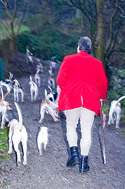 Fox hounds and hunt in Ambleside, Cumbria, England, United Kingdom, Europe