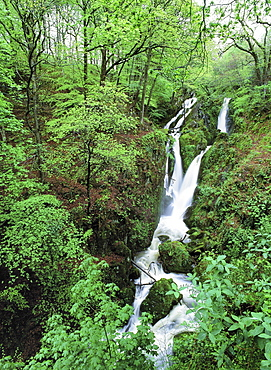 Stock Ghyll waterfall and surrounding woodland in spring, Ambleside, Lake District National Park, Cumbria, England, United Kingdom, Europe