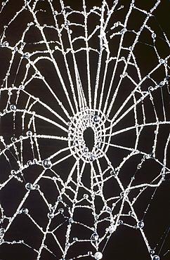 A frozen spider's web, Cumbria, England, United Kingdom, Europe