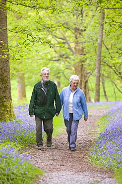An elderly couple walking through a bluebell wood on the shores of Coniston Water, Lake District, Cumbria, England, United Kingdom, Europe
