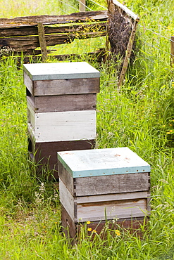 Beehives in Spring Mill Garden near Kendal, Cumbria,, United Kingdom