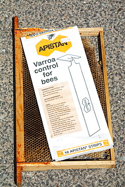 Apistan being used to combat the Varroa mite in hives in Cockermouth Cumbria England, United Kingdom, Europe