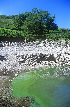 Toxic blue green algae on Haweswater reservoir during a hot summer, Lake District, Cumbria, England, United Kingdom, Europe