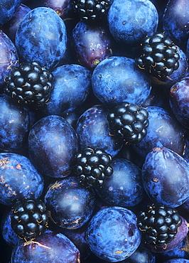 Damsons and blackberries, England, United Kingdom, Europe