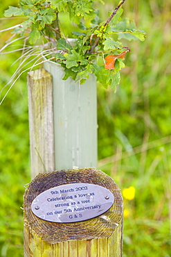 Plaque with information about the person who requested the offset by planting a tree, Sand Martin Wood in Faugh near Carlisle, Cumbria, England, United Kingdom, Europe